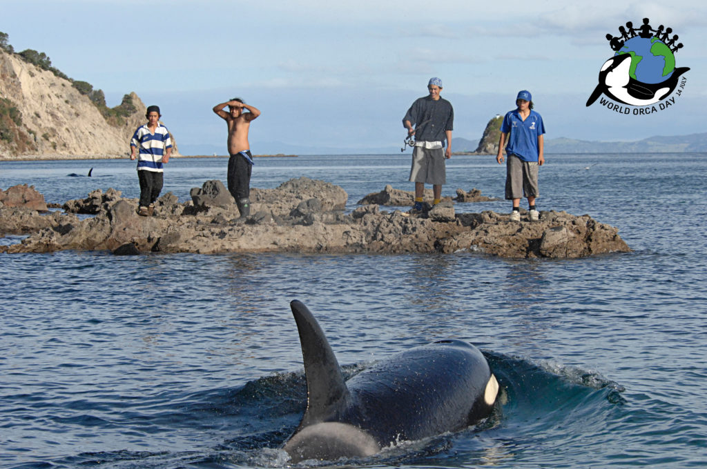 Wild orca investigates a group of men standing on rocks